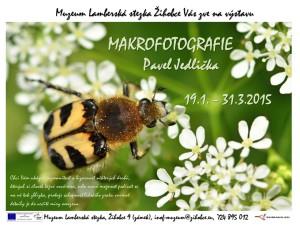 Makrofotografie_Jedlička
